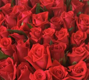 還暦赤バラ60本花束