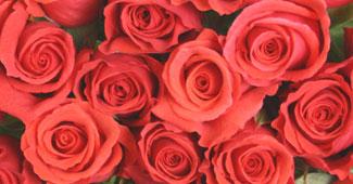 薔薇 花 言葉 赤い