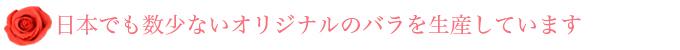 日本でも数少ないオリジナルのバラを生産しています
